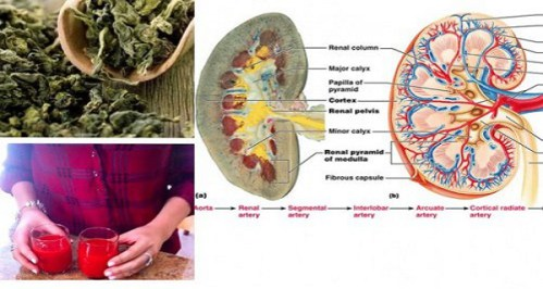 8 Reasons Why Your Kidneys Need A Detox And How To Do It Naturally